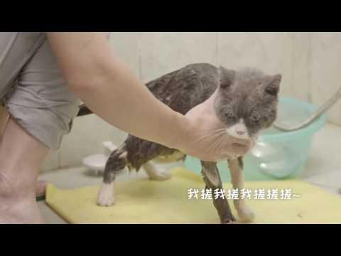 不知道怎样给猫猫洗澡?看这个视频就够了!