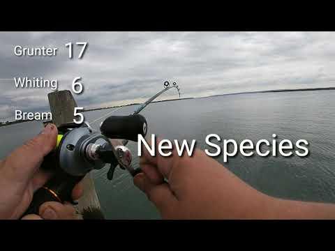 Fishing At Redland Bay Jetty