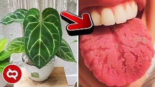 Jangan Simpan Bunga Ini Lagi Dalam Rumah Bahaya Bagi Kesehatan Anda