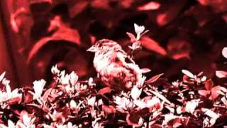 Ulver - Future Sound of Music - Musik Video Art