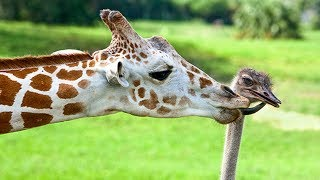 😍 10 UNBELIEVABLE ANIMAL FRIENDSHIPS 🐮❤️🐢