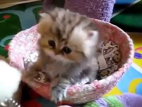 милые котята и смешные фото