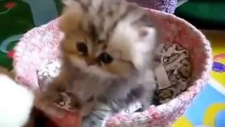 Прикольные кошки веселые кошечки и милые котята  Забавно смотреть!!