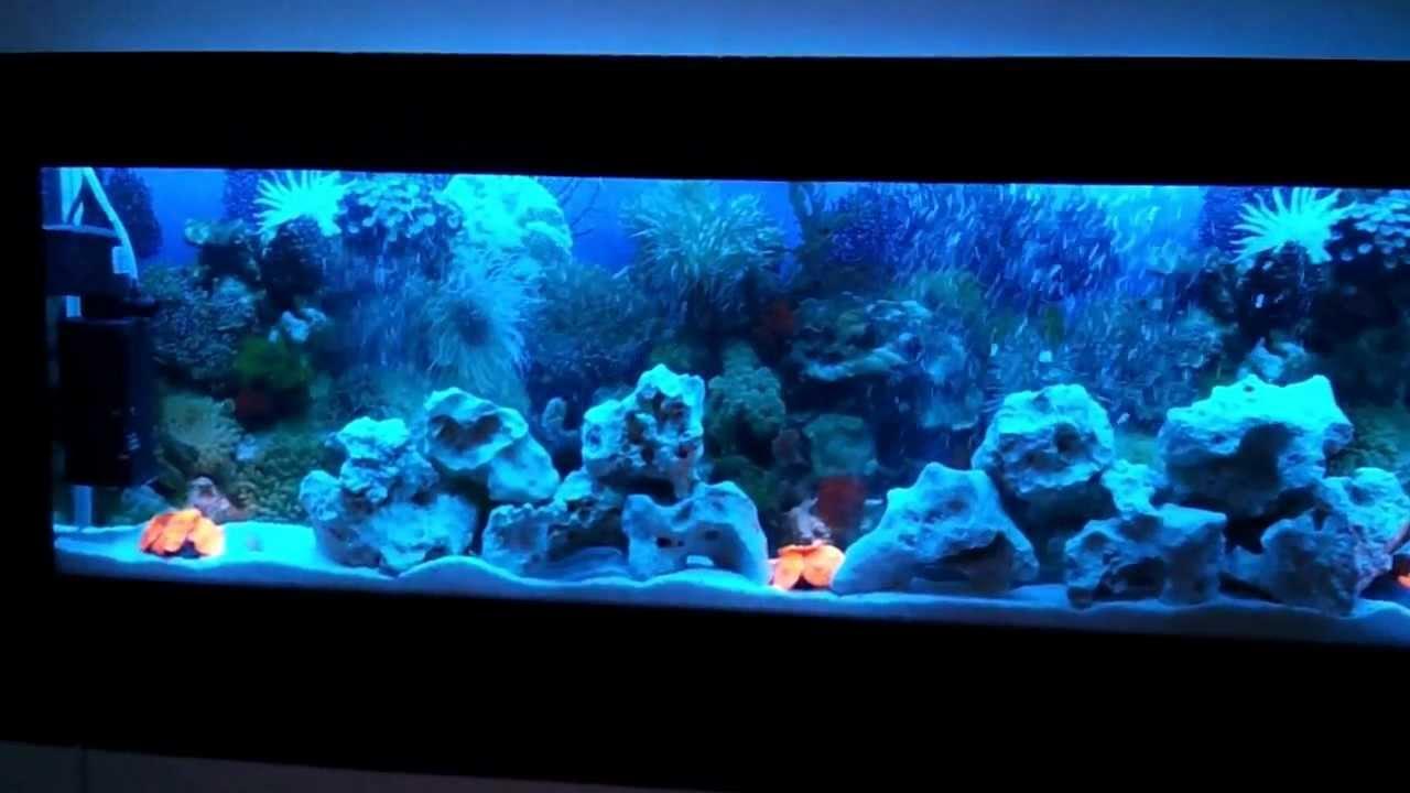 Freshwater aquarium fish uk - Luxury Wall Mounted Fish Tank Aquarium Www Wallaquariumshop Co Uk