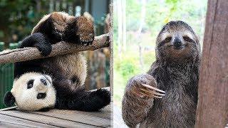 9 самых глупых животных в мире