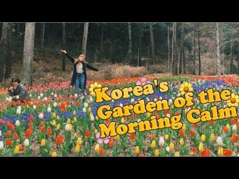 Visiting the Garden of the Morning Calm Outside of Seoul, Korea VLOG (아침고요수목원)