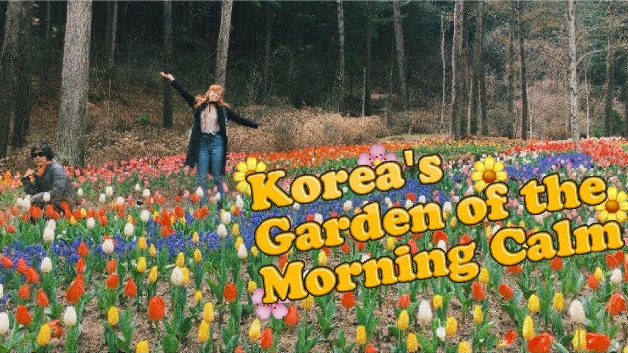 Garden Of The Morning Calm   Spring In Seoul, Korea VLOG (아침고요수목원)