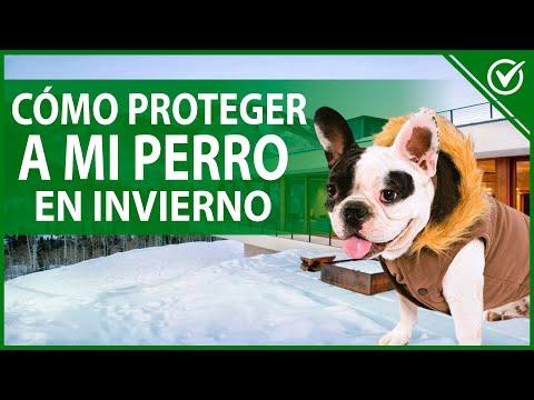 Cómo Proteger a mi Perro 🐶 Cuando Tiene frío en Invierno 🐶