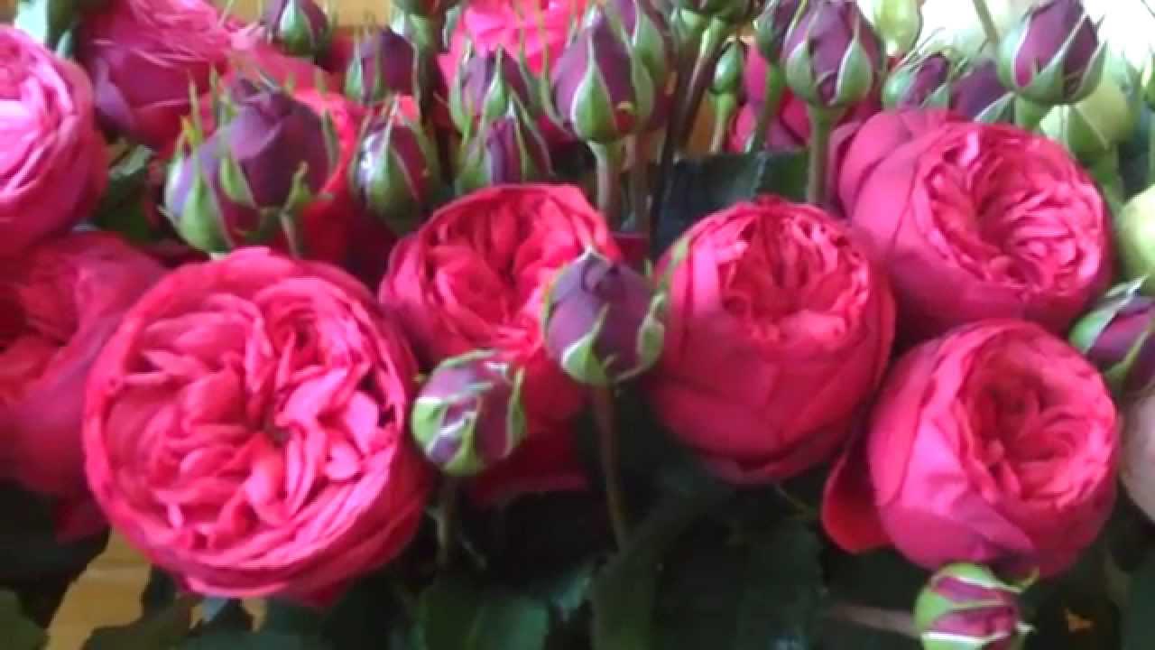 Piano Garden Rose Series: Bridal Piano, Pink Piano And Red Piano