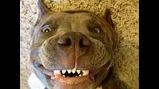 Смешные собаки 4 ● Приколы с животными лето 2014 ● Funny dogs vine compilation ● Part 4