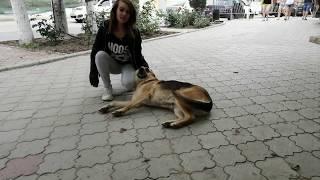 Крым. Судак. Собака - друг человека