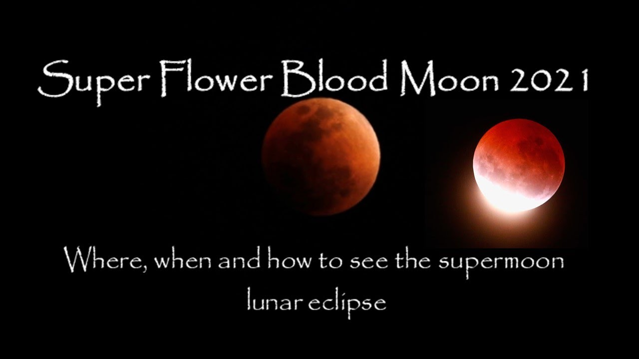 Super Flower Blood Moon 9   Super Blood Moon  Where, when and how to  see the lunar eclipse