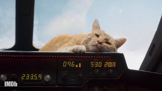 Meet Goose: Captain Marvel's Kitty   IMDbrief