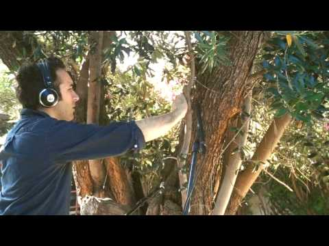 Diego Stocco - Music from a Tree
