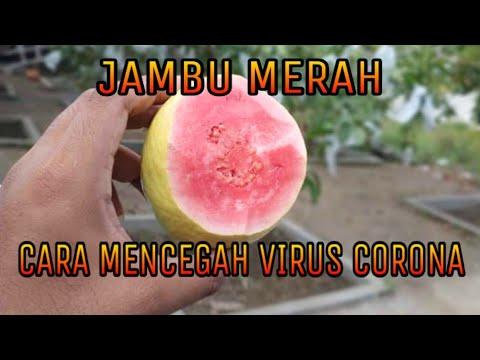 cara-cegah-virus-corona-di-wisata-kampung-jambu-karangsono