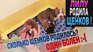 Лилу Родила Сколько щенков Один щенок больной Что с ним