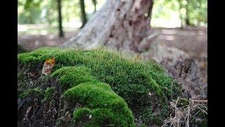 Martwe drzewa - natura