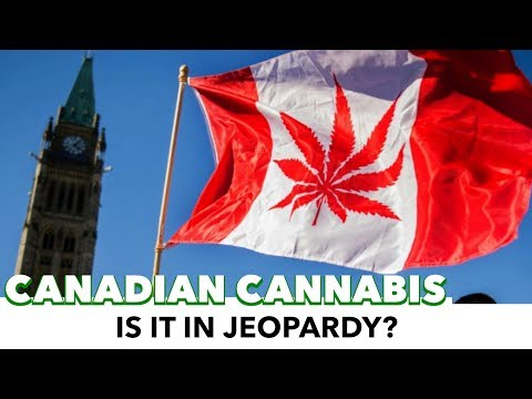 Is Canadian Legalized Cannabis In Jeopardy?