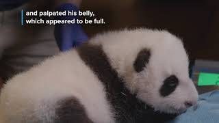 #PandaStory: Cub's Second Veterinary Exam