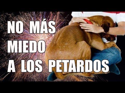 4 Trucos para Eliminar el MIEDO de tu perro a los PETARDOS a Largo y Corto Plazo