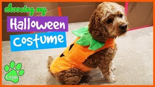 Dog Chooses His Halloween Costume / Logan The Adventure Dog