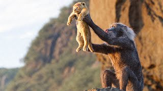 Circle of Life Song Scene THE LION KING Movie MP3