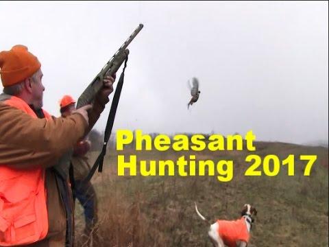 Pheasant Hunting Pennsylvania 2017