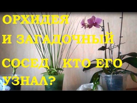 Вопрос: Насколько капризен цветок орхидея?