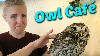 what-it-s-actually-like-at-an-owl-caf-in-japan