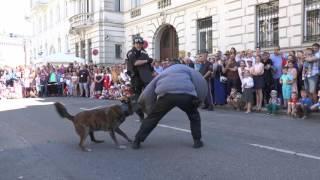 Показательные выступления дрессированных полицейских собак