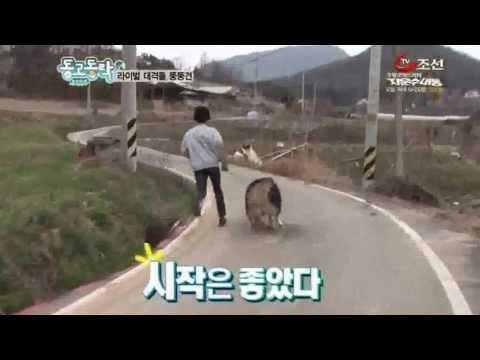 StarKennel 말라뮤트 방송촬영분 동고동락