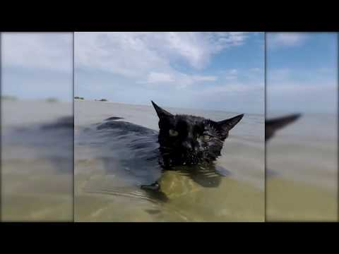 Cat of The Swimming At The Beach!