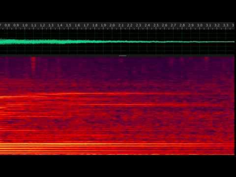 Minke Whale (Balaenoptera acutorostrata) boing sound