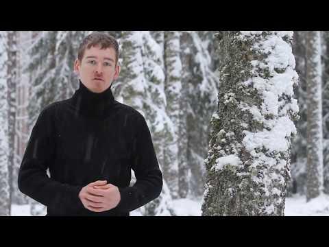Metsakasvatuse ABC Kas raieküps mets  mädaneb?