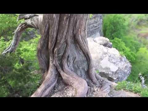 La Rue Pine Hills - Shawnee National Forest (60 Second Nature Series)