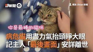 病危貓用盡力氣抬頭睜大眼 記主人「最後畫面」安詳離世