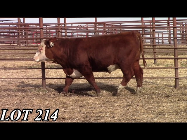 Mead Angus Farms Lot 214