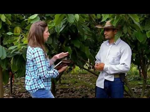 Cacaos especiales en Escuela de Campo