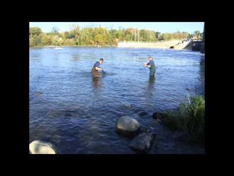 Salmon Fishing And Fish Ladder. St Joseph River, Berrien Springs
