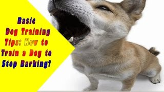 ►►how To Stop Dogs Barking  | It's Easy When You Know This One Trick