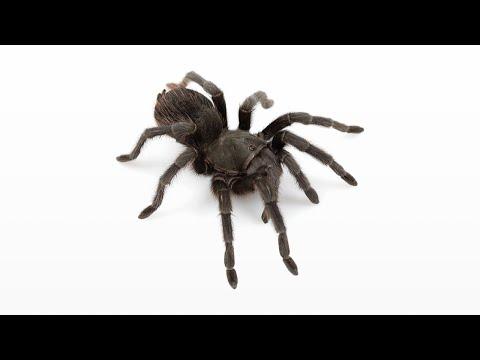 Woher die Angst vor Spinnen kommt — Doktor Allwissend