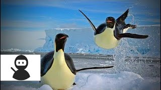 Funny Animal Fails 😂😂 Funny Animals Doing Funny Moments (Part 1) [Epic Laughs] HD
