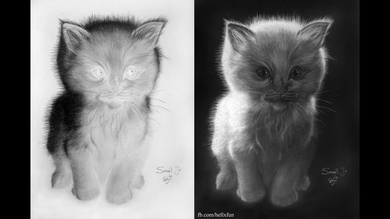 Inverted Colors Drawing of a cat - YouTube