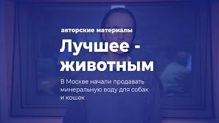 Лучшее - животным. В Москве начали продавать минералку для кошек и собак