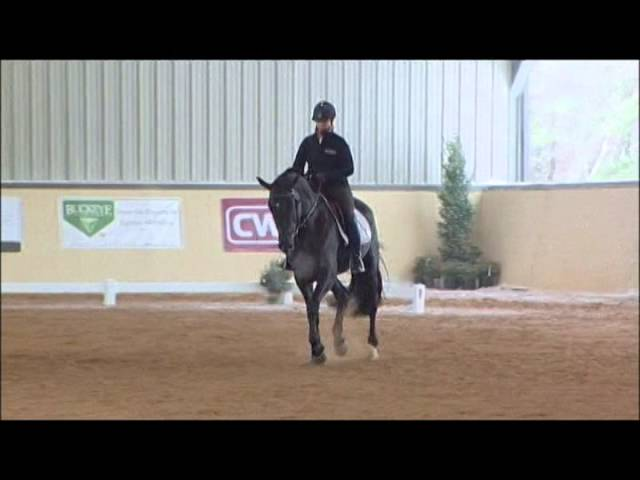 Dracula d'Avalon - 2009 Black Oldenburg Stallion