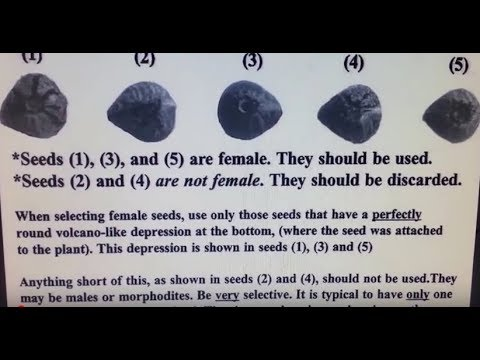 Pick Out FEMALE Cannabis Seeds 100% Everytime On Your Flat Earth