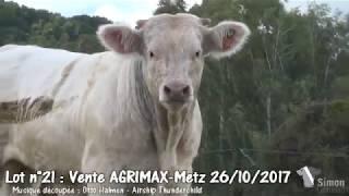 Lot 21 Vente Simon Genetic Agrimax 26 octobre 2017 à Metz