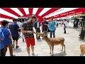 Japan Trip 2018 - Day 4  - Nara, Todai-Ji, Inari, Imperial Palace