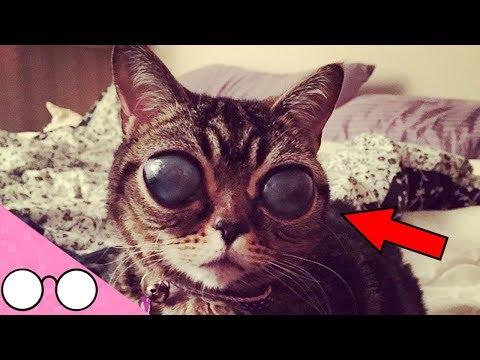 7 UNBELIEVEABLY Unusual Looking Cat Breeds!