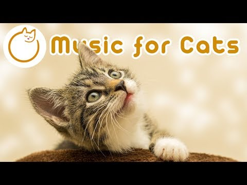 Music For Cats Used By 10 MILLION Cats For A Great Nights Sleep! (NEW)